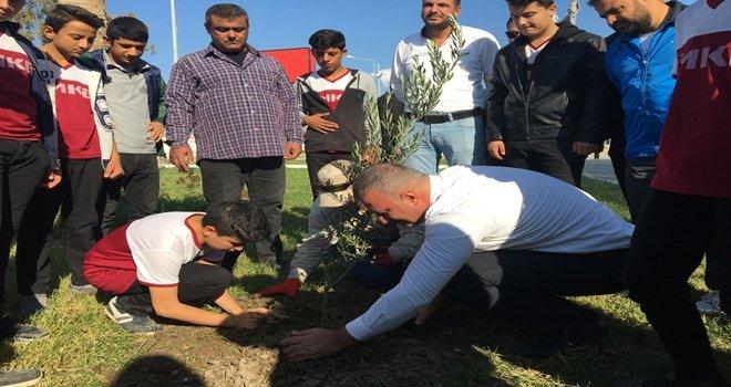 Karataş Belediyesi Zeytin ve Turunçları toprakla buluşturdu.