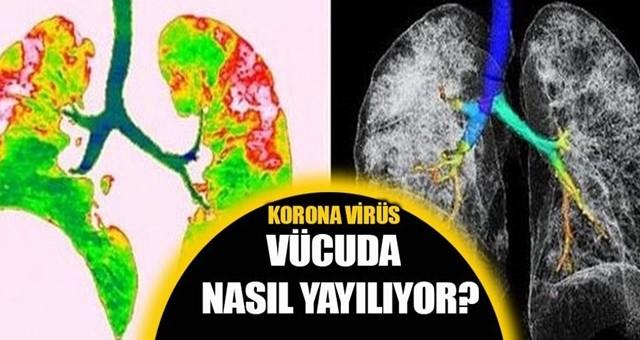 Virüsün vücuda verdiği yeni zararlar!